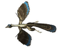 Archaeopteryx bird dinosaur flying - 3D render