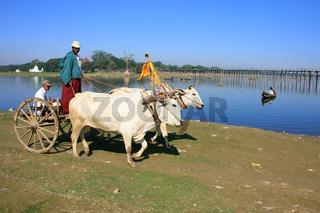 Ox cart going along the lake, Amarapura, Myanmar