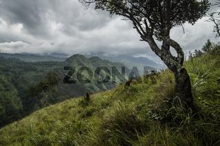 Little Adams peak in stormy weather, Ella, Sri Lanka