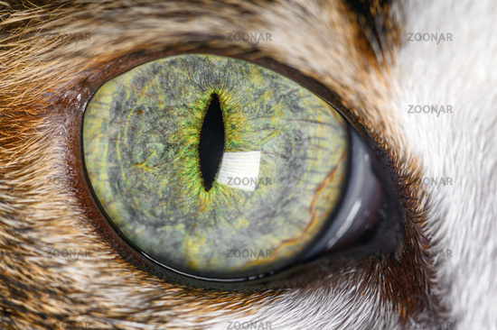 Extreme Close-Up Of Cat beautiful green Eye.