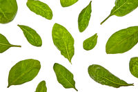 Plant pattern from spinach green natural organic leaves on a white background.
