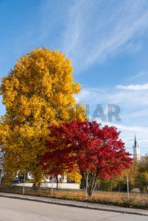 Ahornbäume mit verschiedenen Farben und schönem Panorama