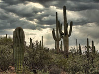 Cactuses and bushes against cloudy sky in Arizona park
