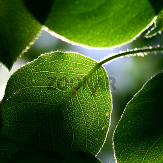 green foliage fresh nature background