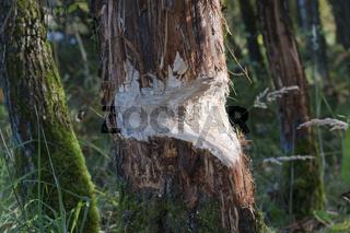 Beschaedigter Baum