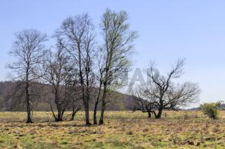 Baumgruppe im Frühling, April