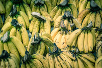 Full background close up abundance of banana bunches at fruit stand in Geylang, Singapore