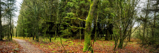 Forest panorama scenery with a tree