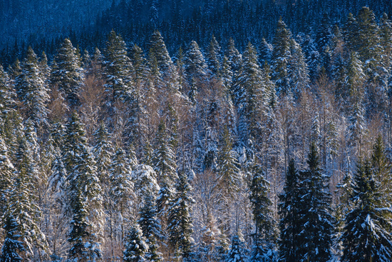 Winter alpine hills with fir and pine forest view from mountain village. Picturesque traveling, hiking, seasonal, nature and countryside beauty concept background scene.