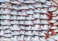 Fresh fish at the seafood market