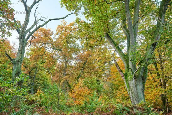 Forest Sababurg Germany