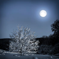 Lonely tree with snow covered in moonlight - wonderful winter night landscape