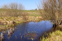 Peat bog pond, Schopfloch, Swabian Alb, Southern Germany