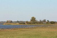 Geese at Lake Gülper