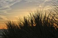 Baltic Sea marram sunset