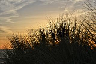 Ostsee Duenengras im Abendlicht