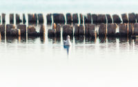 one bird a seagull on the water in the sea on the background of wooden posts in the water