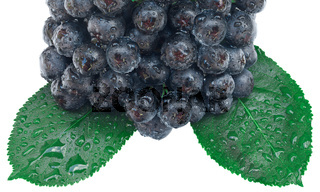 Aronia Fruit Cutout