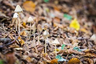 bonnet in forest