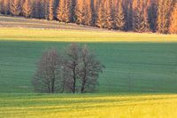 Beautiful green spring rural landscape