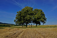 wayside cross under a tree group next to a harvested cereal field,