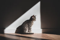 A cat sitting indoors and enjoying the sunlight