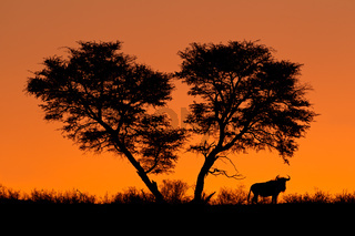 Tree and wildebeest silhouette