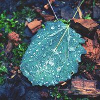 Sparkling fresh water drops of dew or rain on a leaf closeup