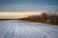 Agricultural field with fresh snow in winter