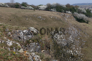 Heidefläche auf der Schaebischen Alb