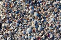 Natural background of broken seashells on beach at sunny summer day