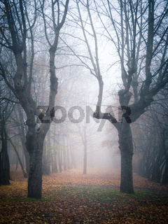 Moody autumnal forest with fog and leaves on the ground