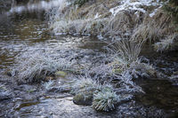 Tuft of grass with frost in the brook