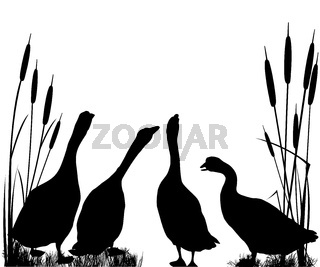 Gooses  silhouettes