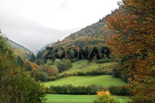 schwarzwald, black forest
