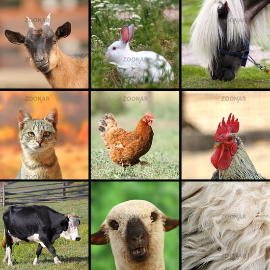large collage with farm animals put together