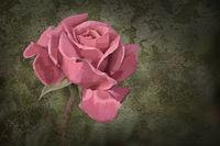 Rose Photo Painting.jpg