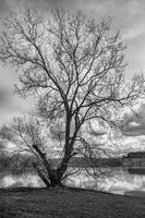 The tree by the lake