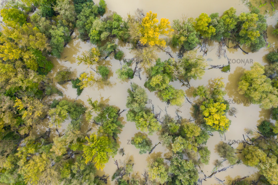 Green and yellow trees in swamp with water flowing around them during flood.