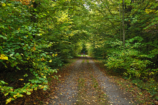 autumn forest in october,