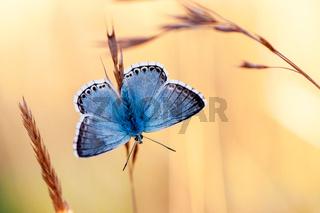 Butterflies of Paradise