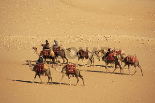 Bedouins riding camels on Giza Plateau, Cairo