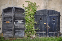 Garage doors - Almost overgrown. . .