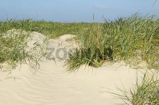 Sandstruktur, Strandhafer, Ammophila,