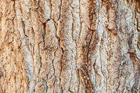 Baum Stamm Rinde als Holz Hintergrund Textur Muster