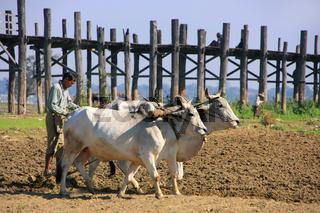 Local man working on a farm field near U Bein bridge, Amarapura, Myanmar