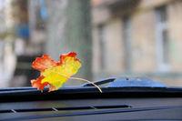 Dry autumn leaf lying on windshield of car. Yellow autumn leaf lies near janitor at car