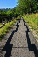 Schattenspiele auf einem Fahrradweg