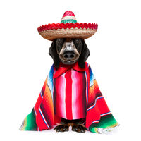 mexican dachshund with poncho