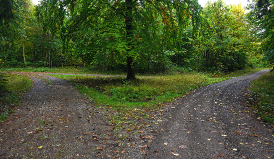 parting of the ways in the autumn forest
